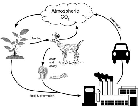 carbon cycle diagram worksheet the carbon cycle model science