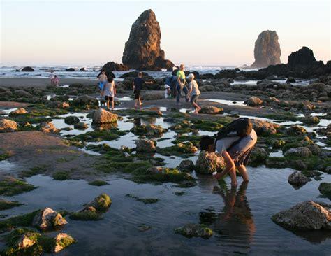 cannon beach low tide adventures at haystack rock