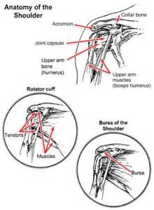 bicep tendonitis bench press 17 best ideas about shoulder injuries on pinterest