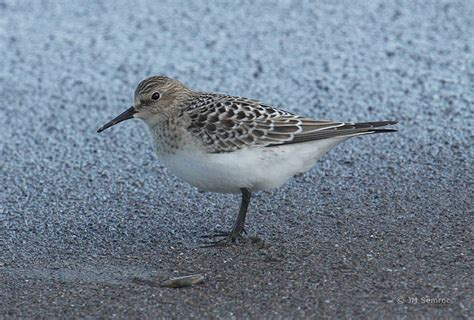 rare birds arriving in waves to northeast ohio just in