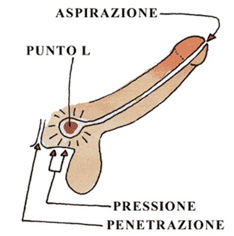 masturbazione femminile test il punto l maschile dov 232 e come va stimolato