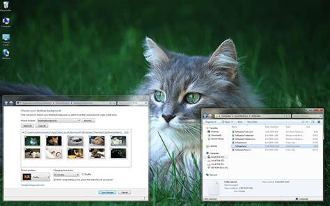 kitten wallpaper for windows 7 cats everywhere windows 7 theme download