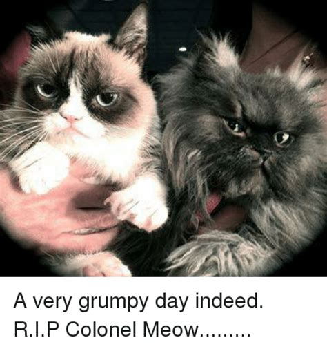 Colonel Meow Memes - a very grumpy day indeed rip colonel meow grumpy cat meme on sizzle