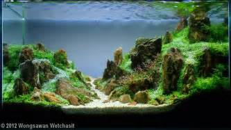 What Is Aquascaping by 2012 Aga Aquascaping Contest 202