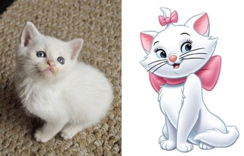film animasi kucing para kucing yang dipercaya lahir dari karakter kartun