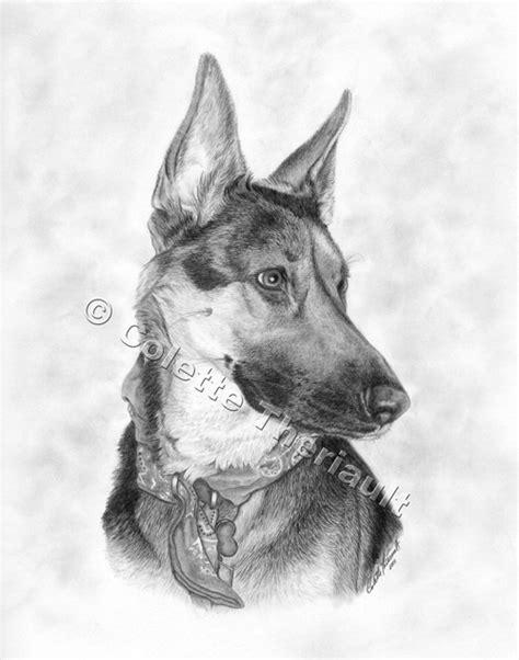german shepherd puppy drawing german shepherd drawing pet portraits painting custom graphite pencil pet