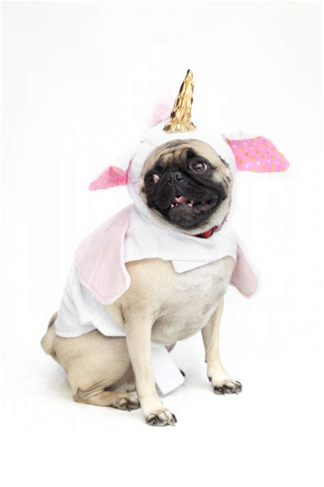 pug in unicorn costume baby cookie costume memes