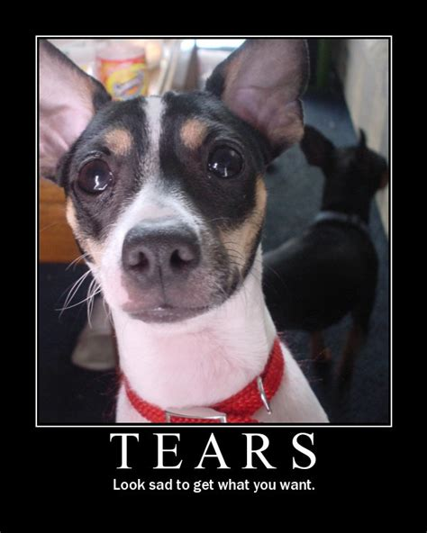 Crying Dog Meme - crying image macros