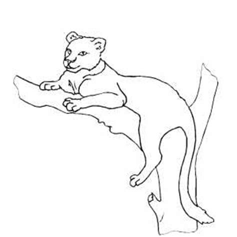 lioness coloring sheet coloring pages