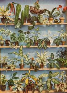 Plants In House by House Plants On Pinterest