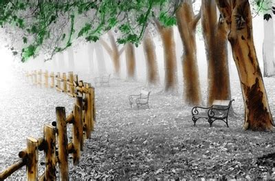beautiful memories a grayscale coloring book of landscapes flowers and nostalgic dreams autumn this is a maze ing books beautiful nature grayscale coloring book grayscale autumn