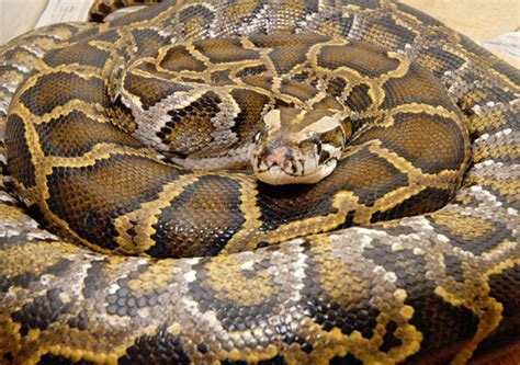 python image snakes animals images