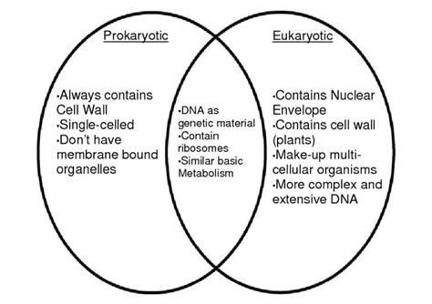 eukaryotic and prokaryotic venn diagram prokaryotes vs eukaryotes classroom ideas