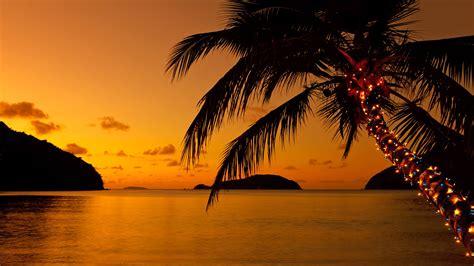 lights on a palm tree lights on a palm tree at the caribbean at