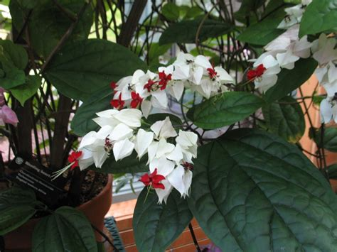 indoor plants coming   dormancy home gardening blog