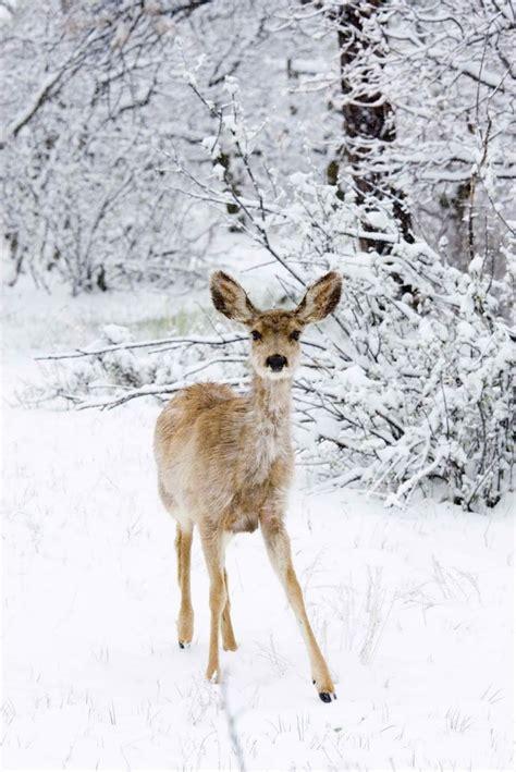 fawn island books 78 best ideas about winter auf schnee und