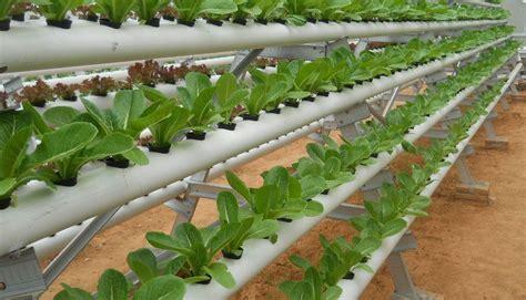 menanam hidroponik tanpa nutrisi gokugen net pengertian tanaman hidroponik dan manfaat