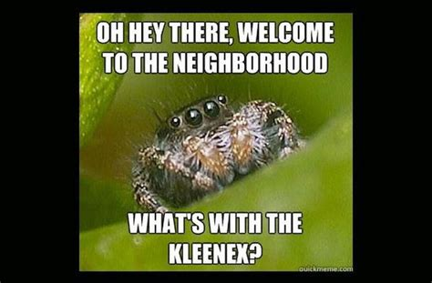 Spider Meme Pictures To Pin - house spider meme pictures to pin on pinterest pinsdaddy
