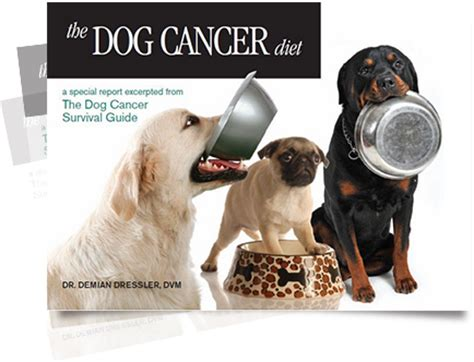 cancer diet for dogs cancer trusted advice from the cancer vets