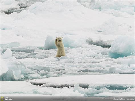 best photo of 2014 21 of the best nature photo entries to the 2014 national