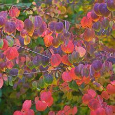 Pflanzen Immergrün Winterhart 1011 by Diese Ziergr 228 Ser Sorgen Im Herbst F 252 R Farbe Herbst