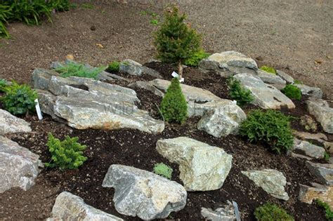 miniature rock garden farm news and miniature conifers