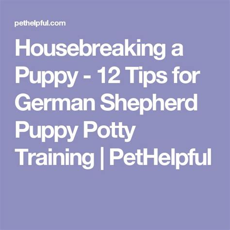 tips for housebreaking a puppy best 25 potty humor ideas on potty age how to potty