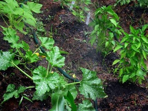 irrigazione giardino fai da te impianti irrigazione fai da te irrigazione impianti d
