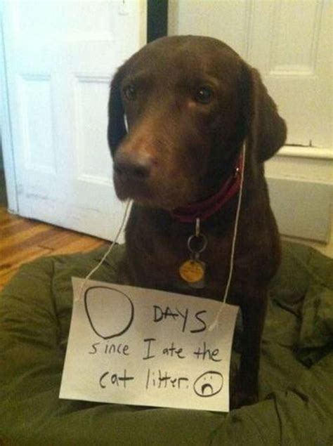 I Didnt Even Er Pet Pet Pet Product 7 by 17 Best Images About Pet Shaming On Cats
