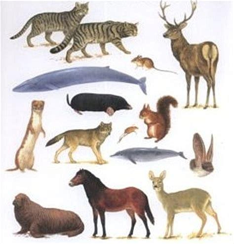 fotos de mam 237 feros caracter 237 sticas dos animais mam 237 feros