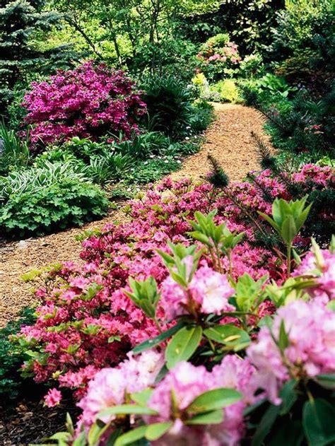 best flowering shrubs for shade use flowering shrubs for shade garden here a variety of