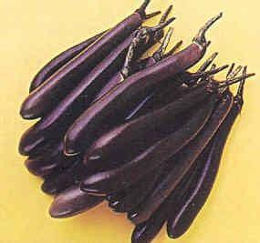 Bibit Terong Lalap Ungu cara menanam terong artikel lengkap tentang budidaya