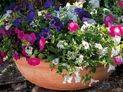 vasi di terracotta da giardino vasi in terracotta da giardino fate spazio a fiori e piante