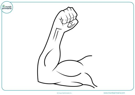 imagenes brazos fuertes dibujos del cuerpo humano para colorear mundo primaria