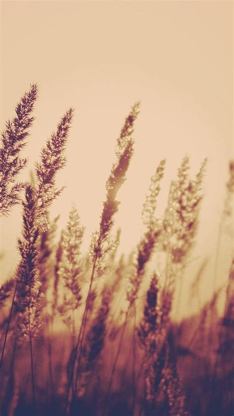 wallpaper aesthetic pinterest nature aesthetic reed plant field blur iphone 6 wallpaper