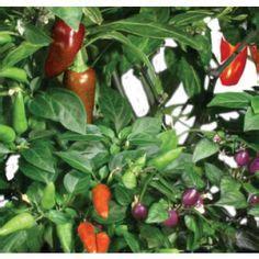 aerogarden diy images   hydroponic farming