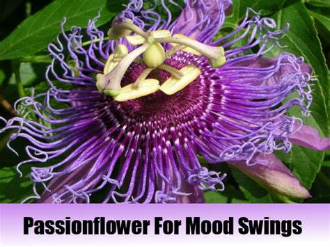 natural medicine for mood swings mood swings herbal remedies natural treatments cure