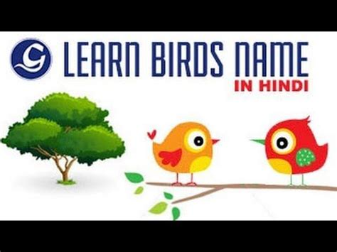 about birds in hindi language learn birds name in hindi for kids cbse content class ii