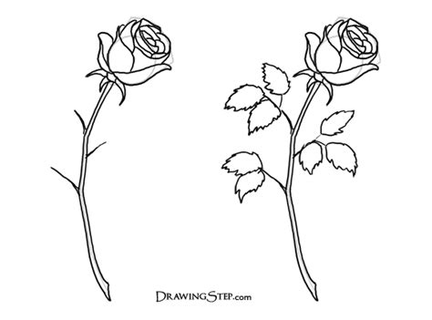 how to draw doodle roses how to draw roses pencil drawing of a