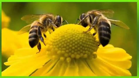 som de abelha - Bee sound - ビーサウンド - YouTube