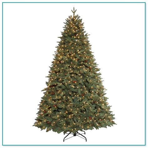 christmas ct christmas tree caign biz real trees at