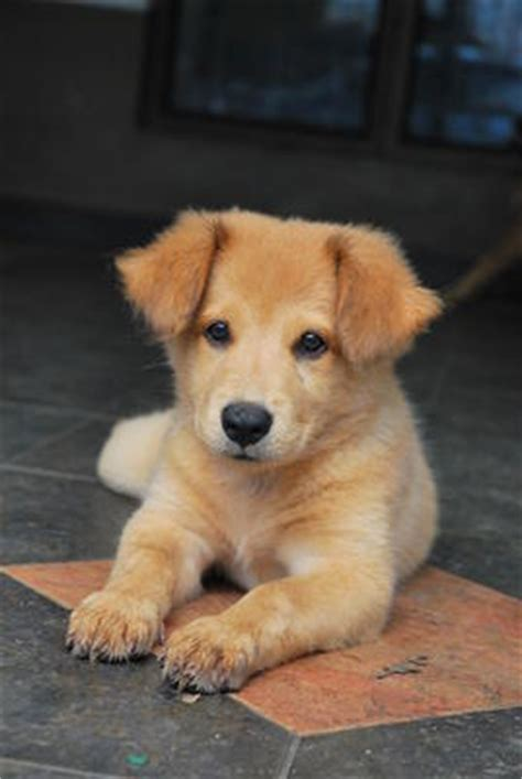 petfinder puppies mixed breed puppies for adoption 7 years 4 months puppies johor bahru from johor