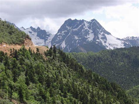 sume definition foresta temperata