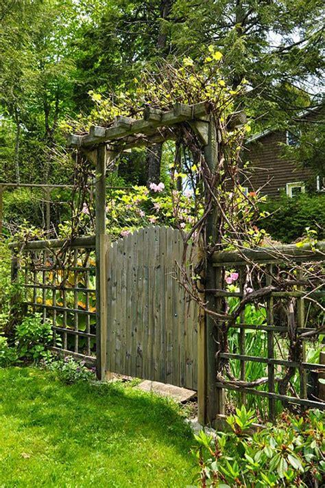 Backyard Gates by 25 Best Ideas About Grape Vine Trellis On Vine Trellis Grape Vine Plant And Arbor Tree