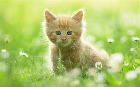 Imagenes de animales en HD para tu fondo de pantalla
