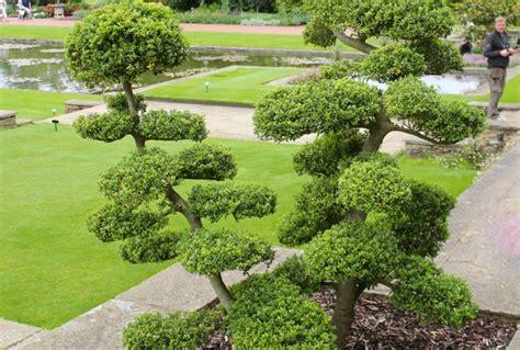 Bien Le Jardin En Septembre #2: ilex-crenata-nuage.jpg