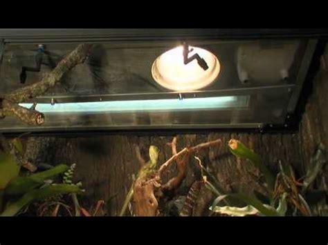 beleuchtung terrarium uv beleuchtung im terrarium