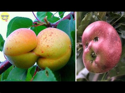 vegetables like unusually shaped fruits and vegetables that look like