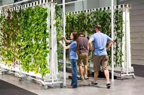 Indoor Hydroponic Farming: Costs and Profits [without the