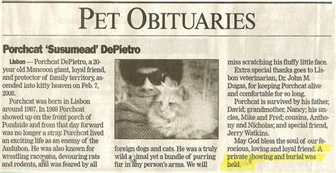 obituary section controversy surrounding pet obituaries the definitive